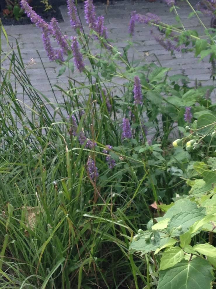 Kleine tuin:  Tuin door Buro Floris, Modern