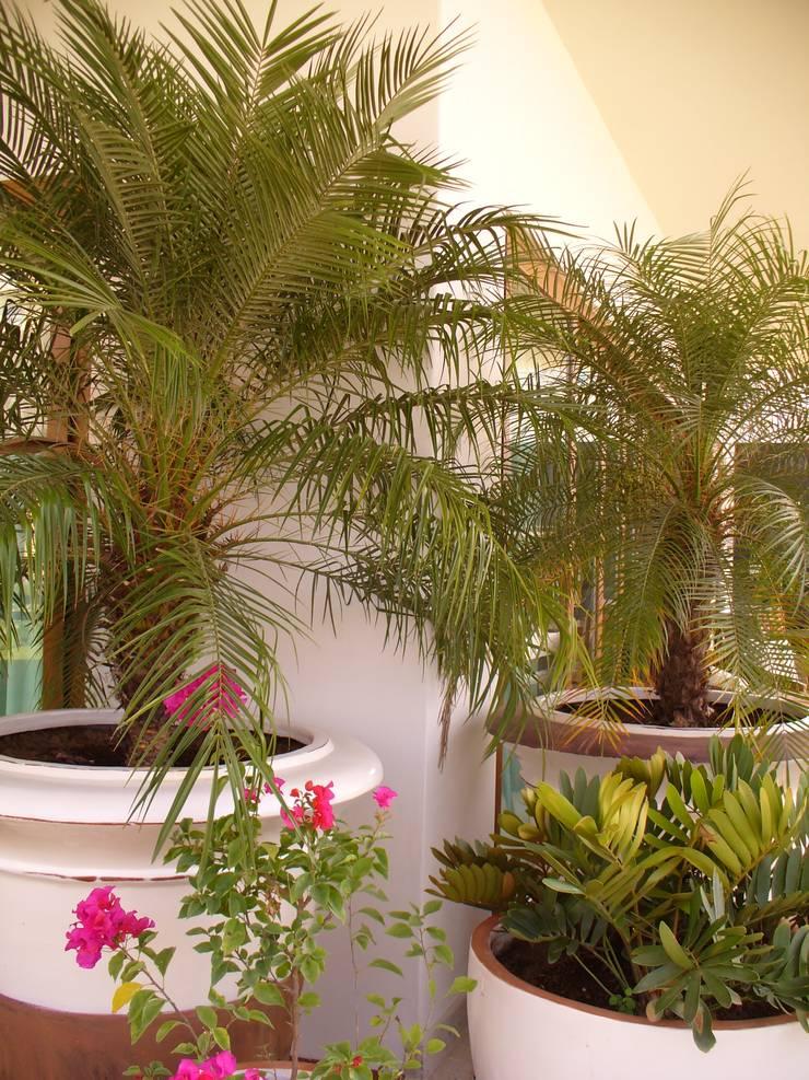 ESPACIOS CON MACETAS: Jardines de estilo  por Tropico Jardineria