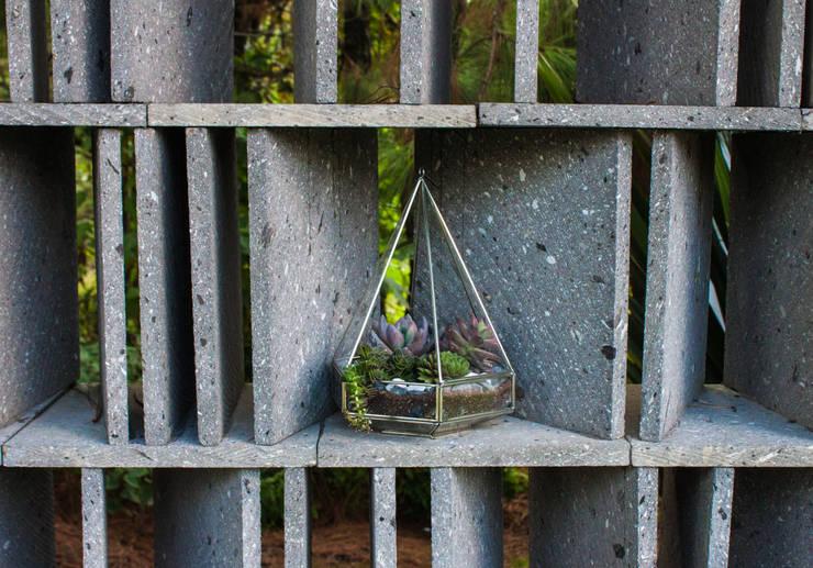 Terrario Babinski: Terrazas de estilo  por Fractales