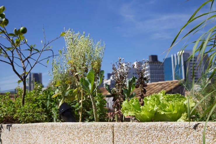 Horta Urbana: Terraços  por Ecoeficientes