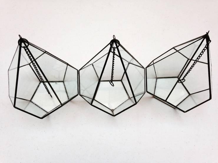Terrario Negro : Hogar de estilo  por Decorería La Suculenta