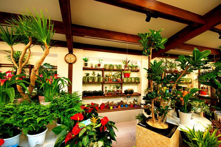 ゆくはし 植物園: 一級建築士事務所  馬場建築設計事務所が手掛けたオフィススペース&店です。,和風 木 木目調