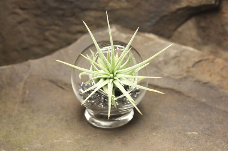 AIR PLANT retro mini Terrarium - kleiner Garten :  Arbeitszimmer von KLAPPERGLAS