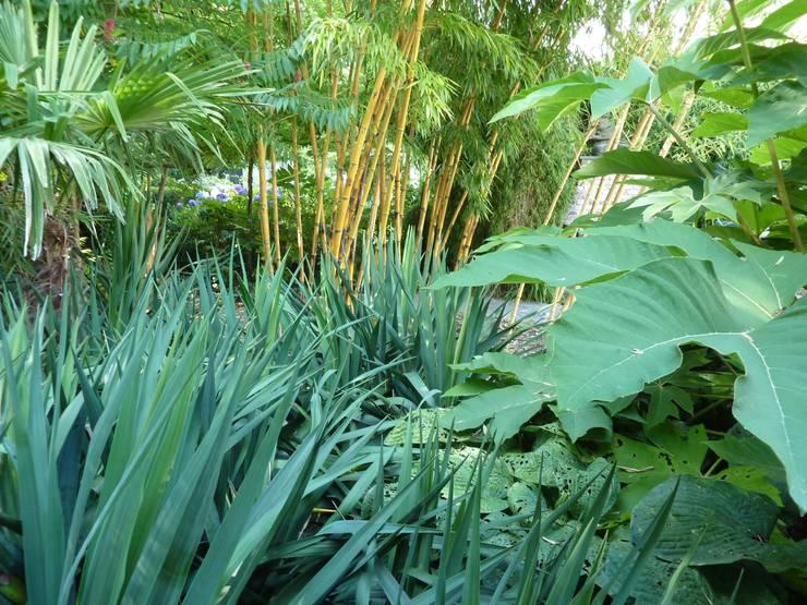 Tropische tuin:  Tuin door Koert Gardening