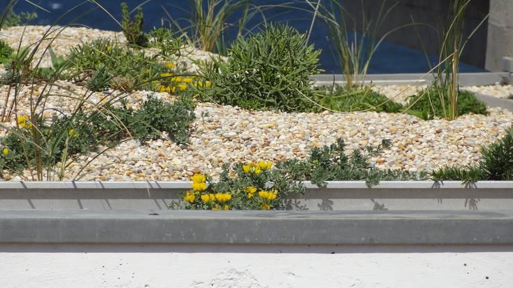 Casa das Algas : Jardins  por Neoturf