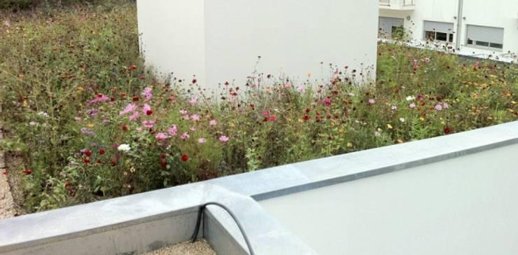 Cobertura ajardinada com prado florido: Jardins  por Neoturf