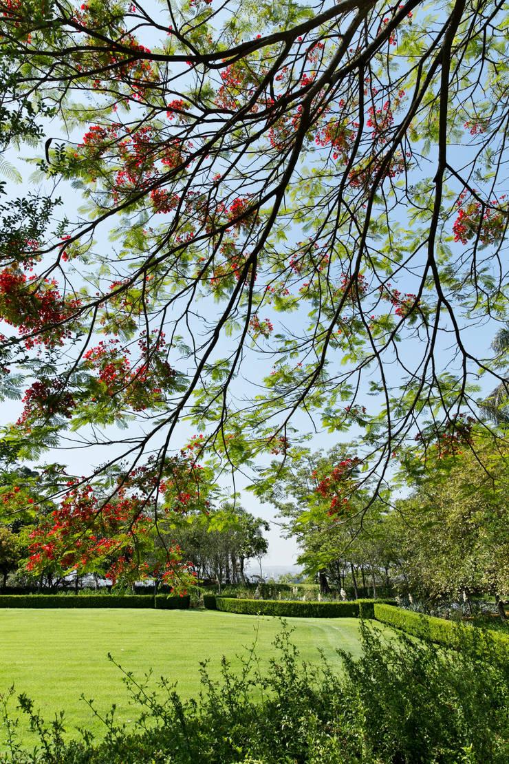 Jardines de estilo  de Luciana Moraes Paisagismo, Clásico