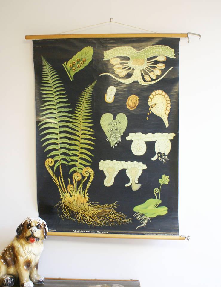 De Varen: Retro schoolkaart. Originele vintage schoolplaat/plantenkunde. :   door Flat sheep, Rustiek & Brocante