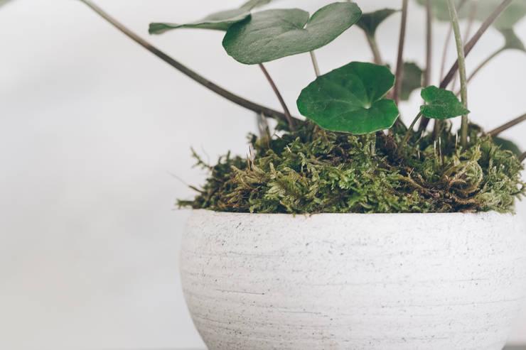 地器とツワブキ: 陶刻家 由上恒美                                          Ceramic Sculptor  tsunemi yukami  が手掛けたアートです。
