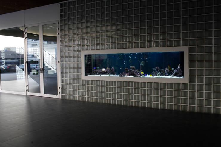 ADn Saltwater aquarium at a private school: Casas  por ADn Aquarium Design