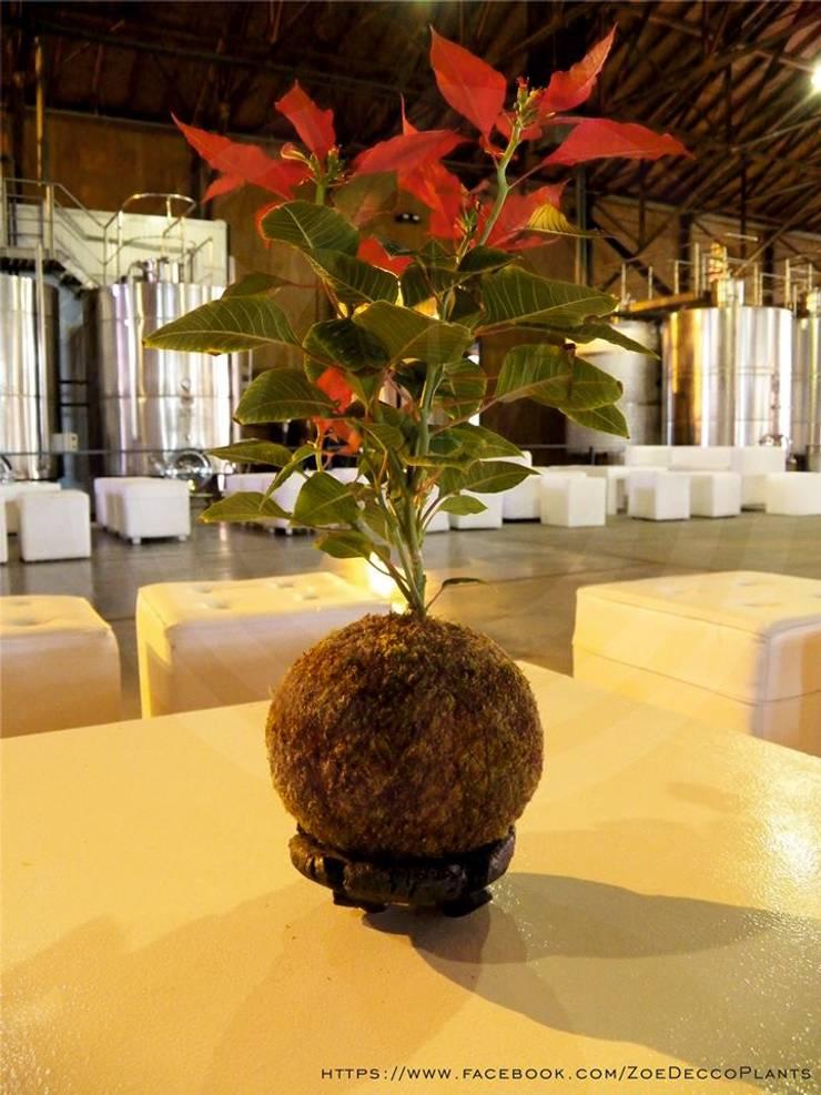 Kokedama Federal: Paisajismo de interiores de estilo  por ZoeDecco,