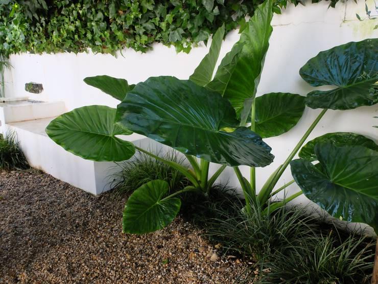 Pormenor: Jardins  por Atelier Jardins do Sul