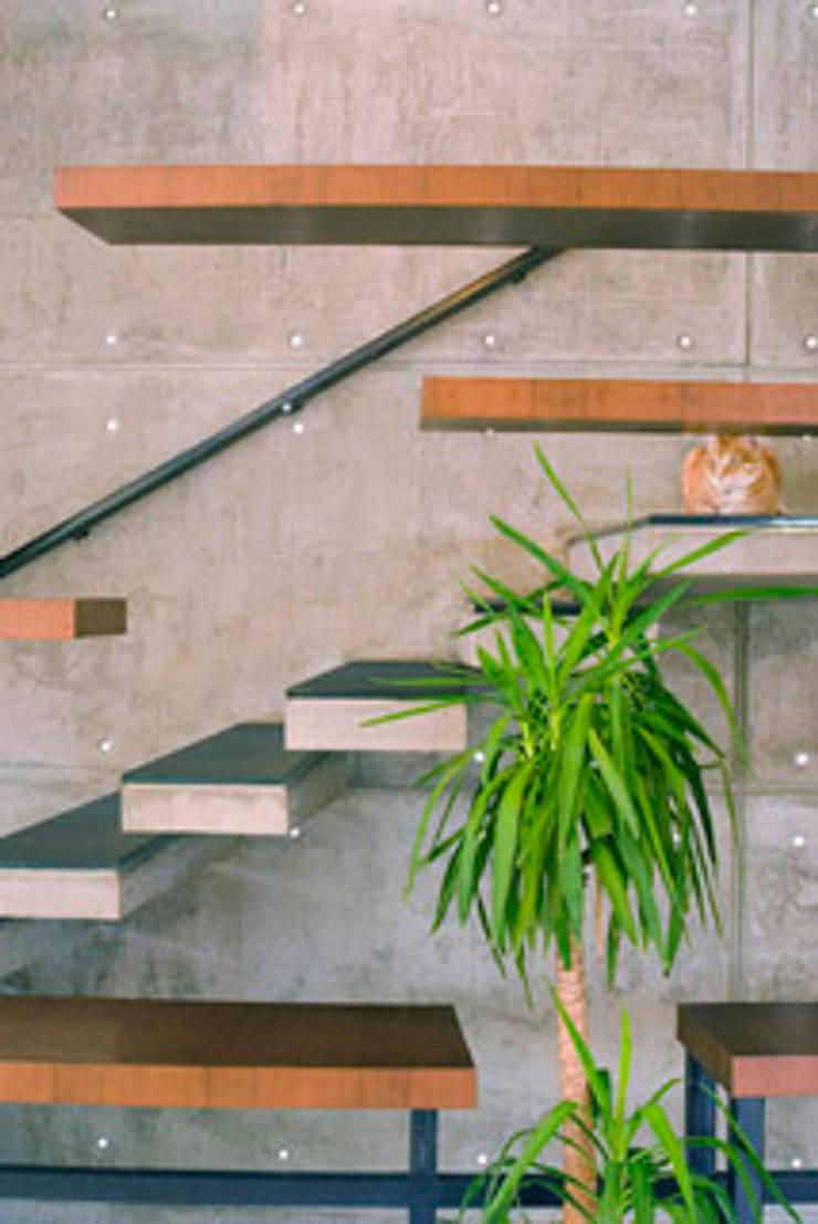 Rakesh Singh Residence:  Corridor & hallway by Sanctuary,Modern