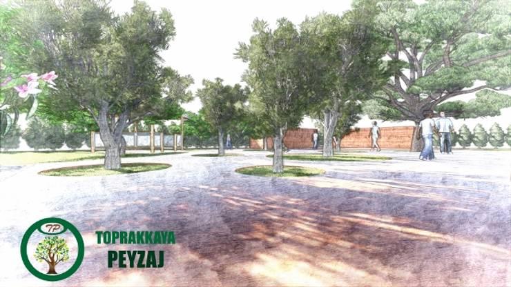 Kerem Toprakkaya – Backside School Olives:  tarz