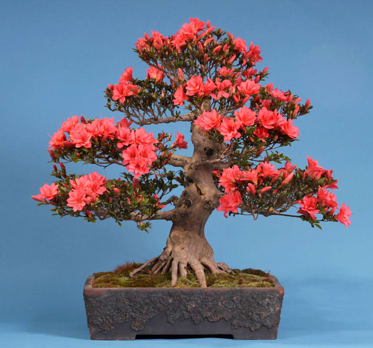 Garden  by Bonsai-Shopping