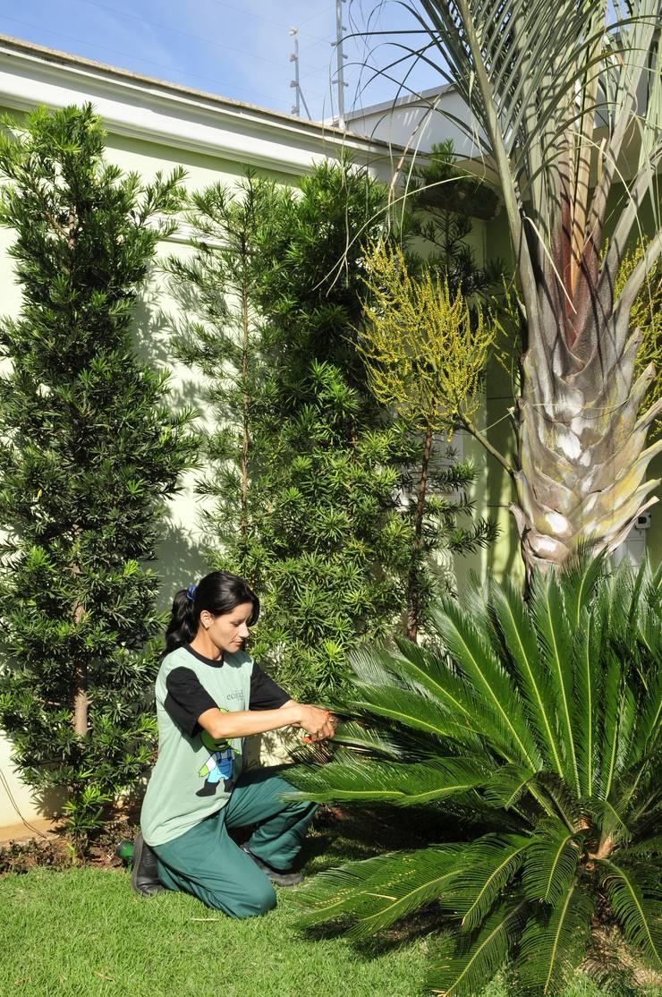 Poda das plantas: Jardim  por Ecojardim