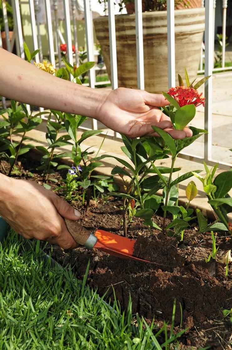 Implantação das ixórias: Jardim  por Ecojardim