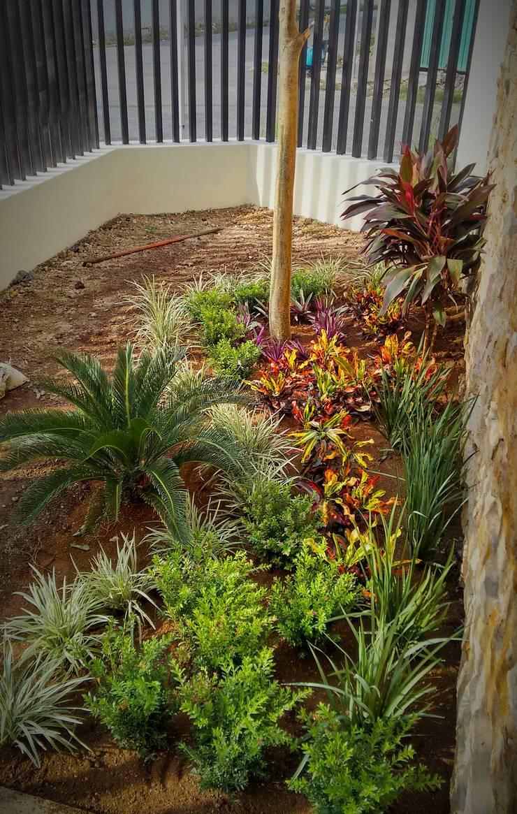 Jardín en esquina - proceso de EcoEntorno Paisajismo Urbano