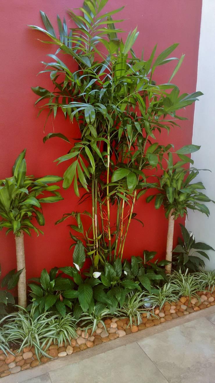 Jardín con muro rojo junto a acceso - final de EcoEntorno Paisajismo Urbano