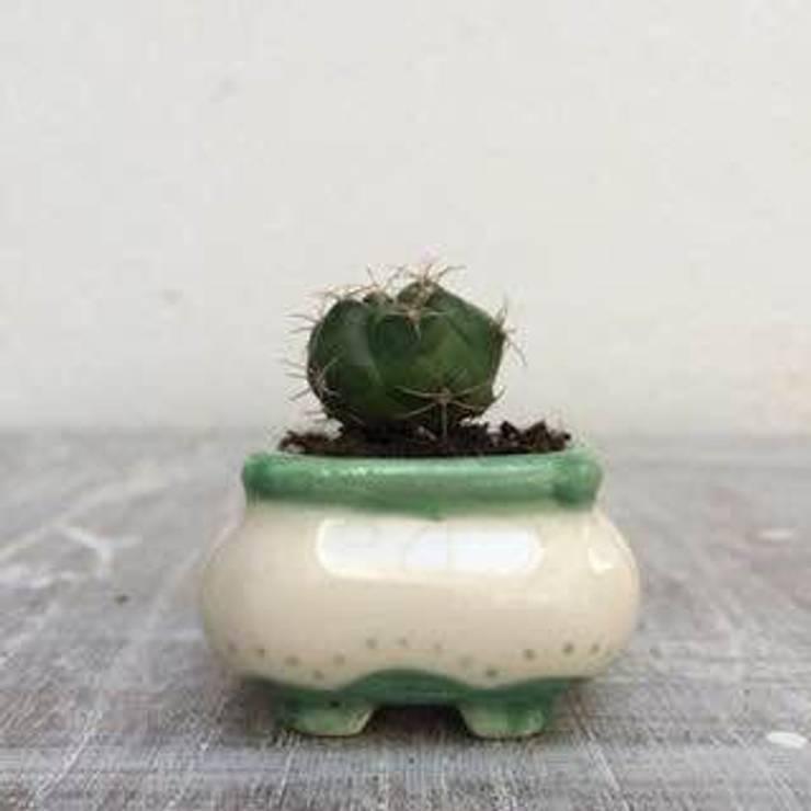 MIni Macetitas: Jardines de estilo  por My Pottery by Ceci Presas