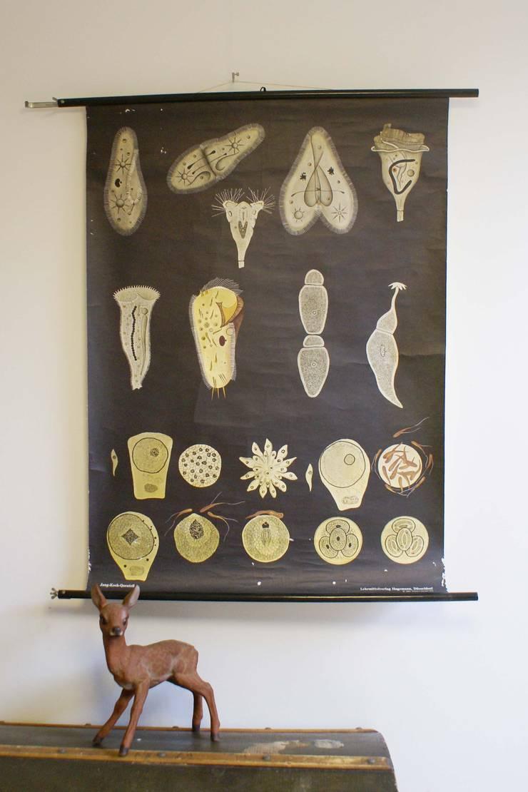 Retro biologie schoolkaart. Originele vintage schoolplaat van Jung Koch Quentell :   door Flat sheep, Rustiek & Brocante
