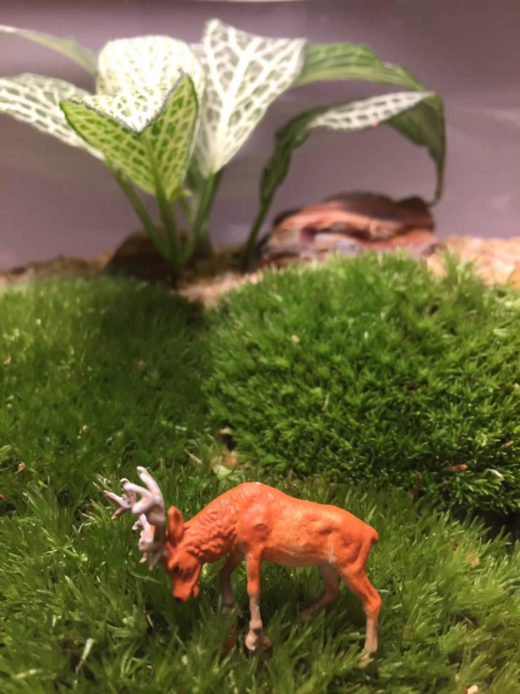 Terrarium love – Deer Terrarium:  tarz İç Dekorasyon