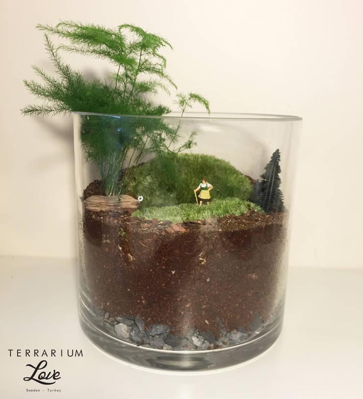 Terrarium love – Heidi Terrarium: modern tarz , Modern