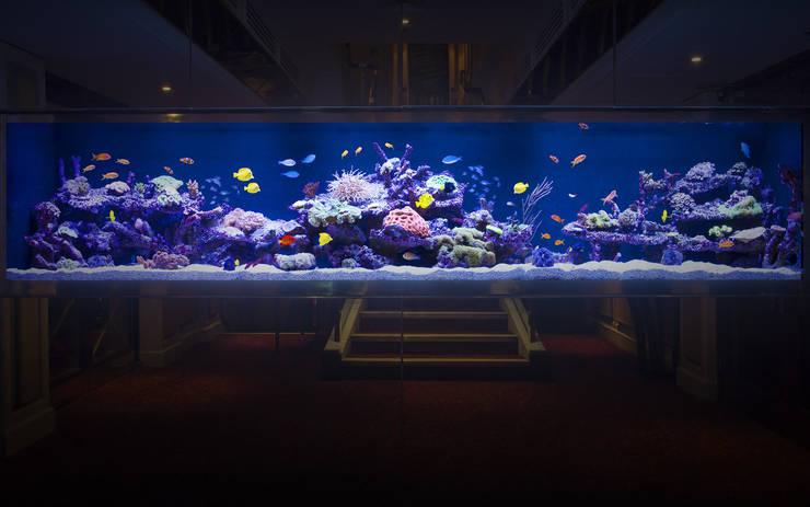 Bares e clubes  por Aquarium Architecture