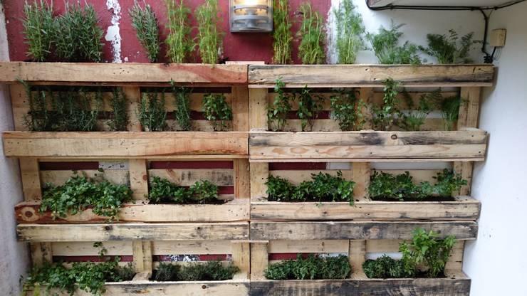 Jardines y jardineras de Bamboo design & garden