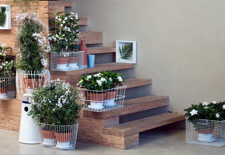 Weiße Blüten im Treppenbereich in Nahaufnahme.:  Raumbegrünung von Pflanzenfreude.de