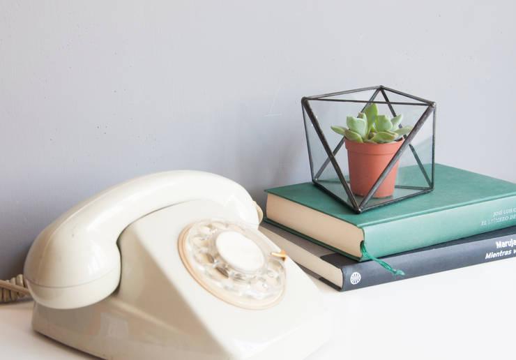 Terrario Octaedro mediano: Hogar de estilo  de ZetaGlass