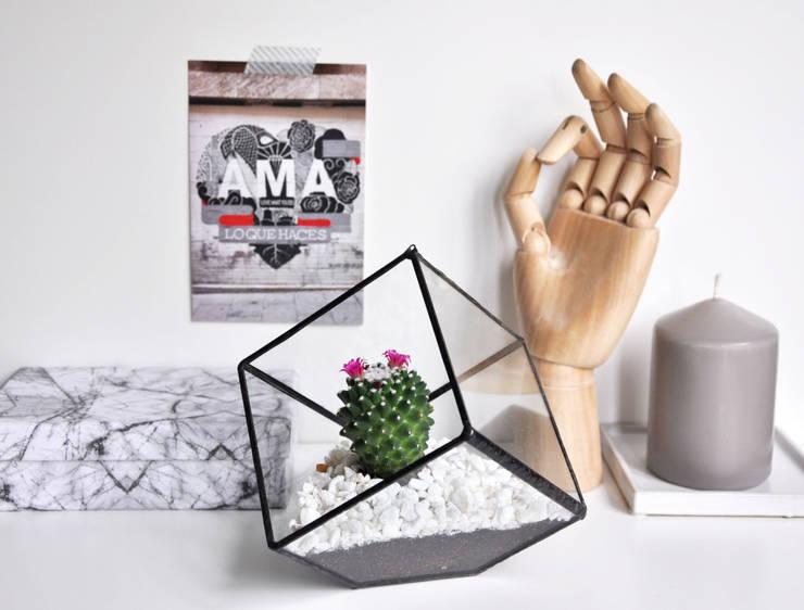Terrario Cubo: Hogar de estilo  de ZetaGlass
