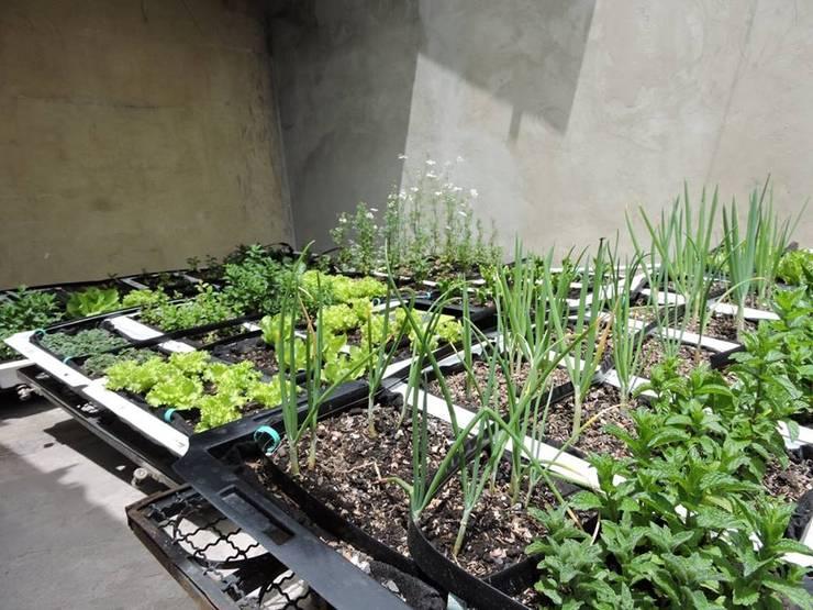 Techos Verdes: Jardines de estilo  por Techos Verdes Productivos