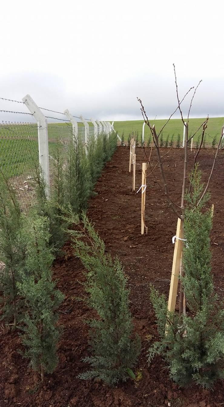 Cemre Fidancılık Peyzaj ve Ahşap Yapı – Çalışmalarımız:  tarz Bahçe
