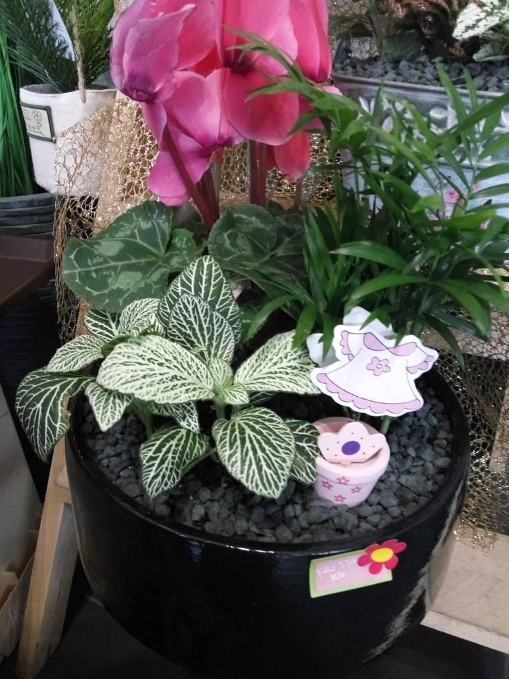Misto de plantas que consomem pouca água: Jardim  por Maravilhas do Berço Lda