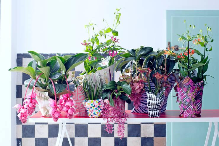 Pflanzenfreude.de:  tarz İç Dekorasyon