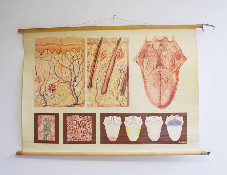 Huid en de tong: Vintage schoolplaat, anatomie van de mens. :   door Flat sheep, Rustiek & Brocante