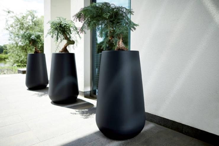 pure cone high: Paisajismo de interiores de estilo  por Elho México