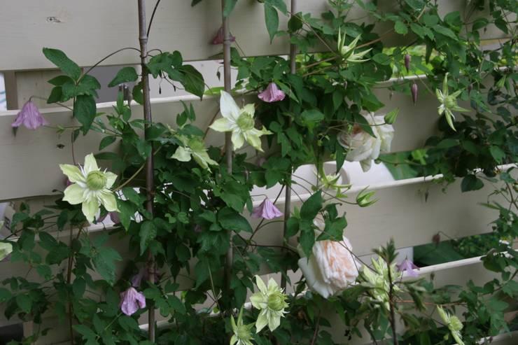 フェンスに絡まるバラとクレマチス: 株式会社ガーデンホリックが手掛けたカントリーです。,カントリー 木 木目調