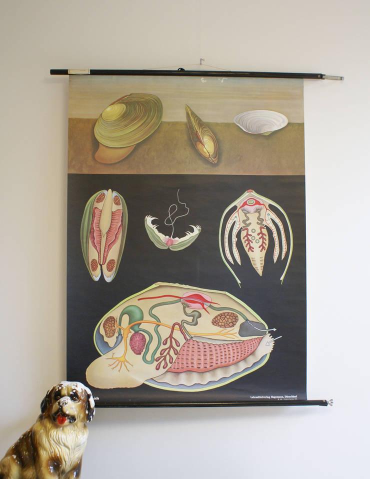 De mossel: Oude schoolplaat . Vintage biologie schoolkaart van Hagemann :   door Flat sheep, Rustiek & Brocante