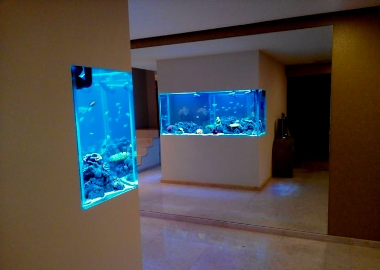 ADn's Saltwater aquarium : Corredor, hall e escadas  por ADn Aquarium Design