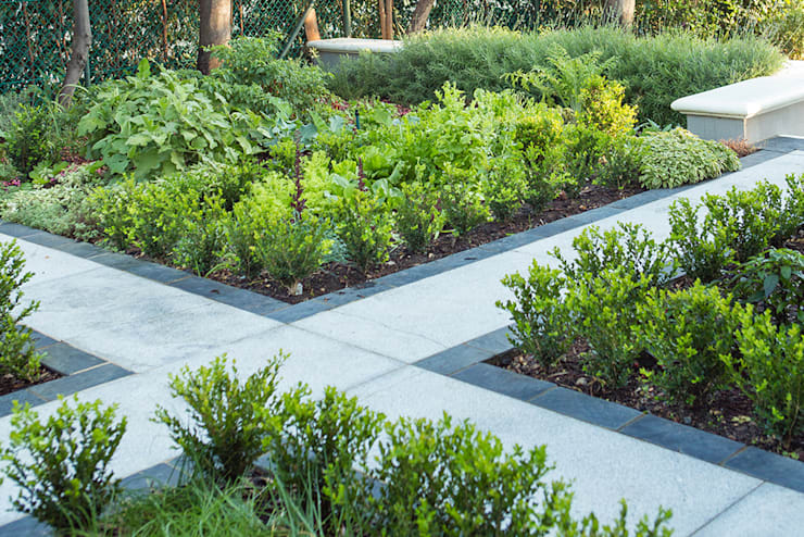 Classic Buxus hedging around herb beds:  Garden by Red Daffodil