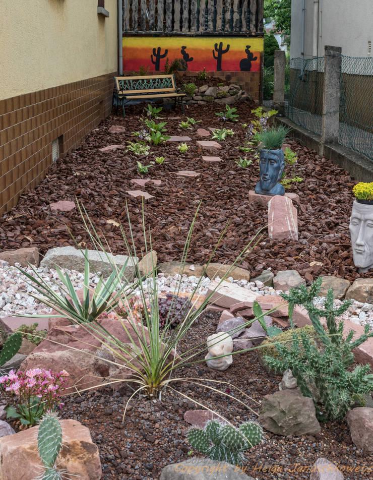 Schattengarten:  Garten von Andreae Kakteenkulturen