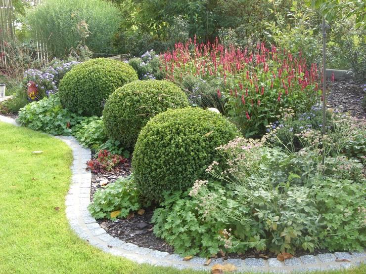 3 große Buchskugel fanden einen neuen Platz:  Garten von KAISER + KAISER - Visionen für Freiräume GbR