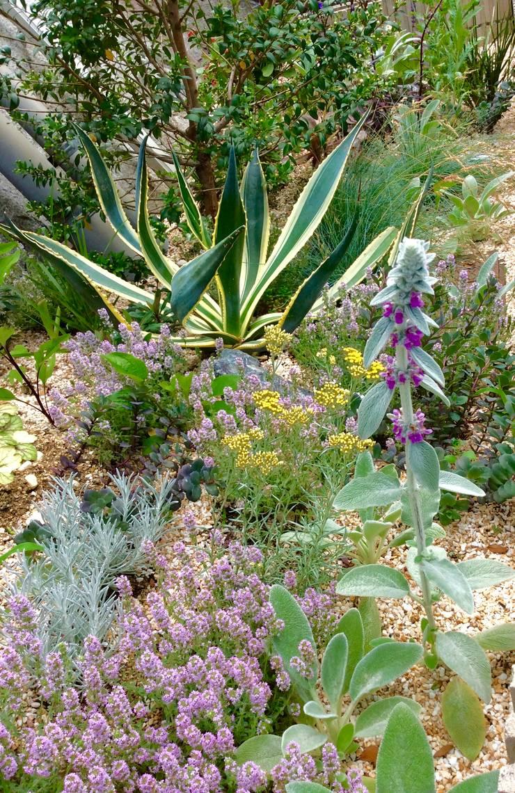 The Gravel Garden : Green Team  coが手掛けた庭です。
