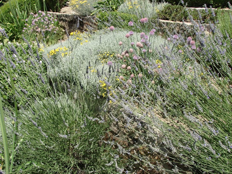 Jardim de aromáticas: Jardins  por andré nascimento-arquitetura paisagista