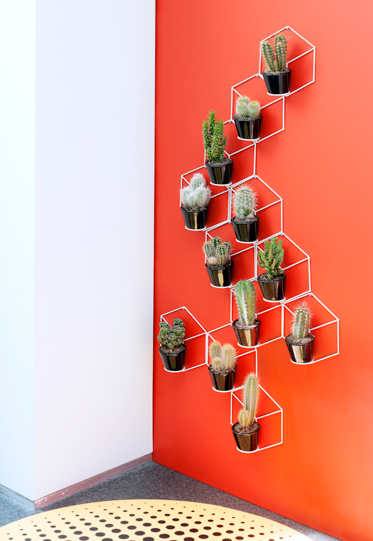 Der kaktus zimmerpflanze des monats august de homify - Kaktus zimmerpflanze ...