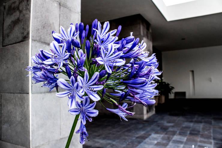 Сады в . Автор – 2M Arquitectura