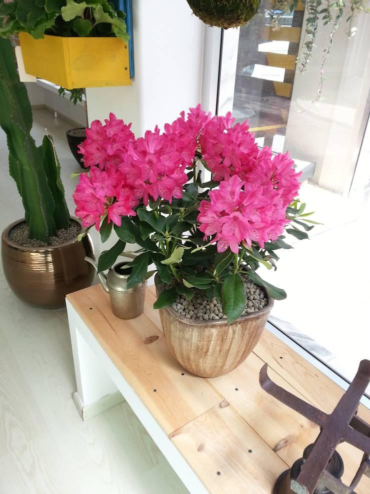 Vaso com rododendro: Varanda, marquise e terraço  por Interior Vivo