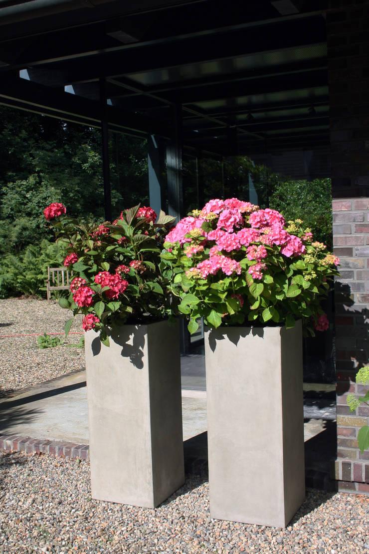 pflanzkübel beton von vivanno | homify